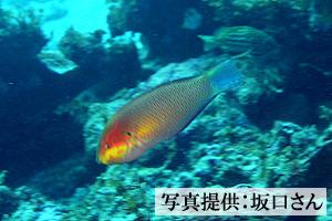 20041107usuba.jpg