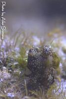 2008_shima.jpg