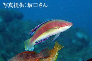 goshiki1.jpg
