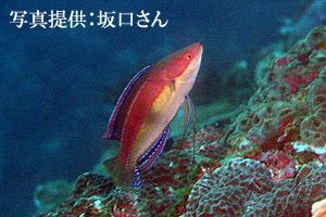 goshiki2.jpg