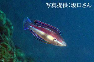 goshiki333.jpg