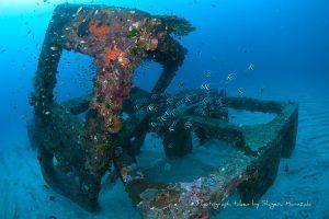屋久島の漁礁(冬の状態)