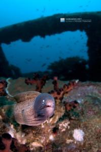 漁礁のサビウツボ