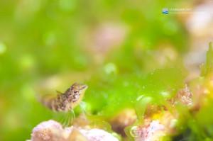 海藻の揺りかごで遊ぶ。。。