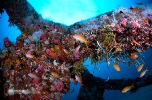 漁礁の魚影が薄く感じた。