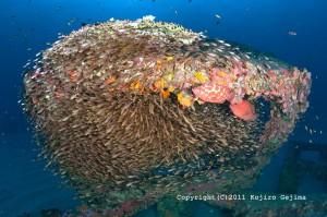 今日はみんな漁礁の中にギューギューに詰まっていた