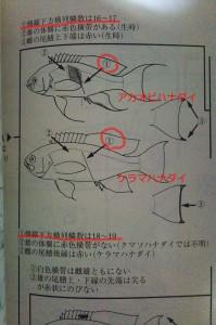 魚類検索の絵