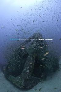 無数のメアジのチビたちが群がる漁礁
