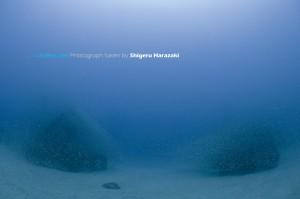 2つの漁礁が魚の群れで覆い尽くされる図