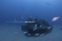 3. ヒレナガカンパチの捕食中はすべてのメアジが漁礁の中に消えた!!