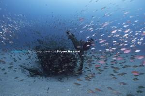 魚の動きを見ていると捕食魚の接近が分かる
