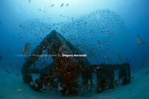 GWの頃よりちょっと魚影が薄くなった漁礁