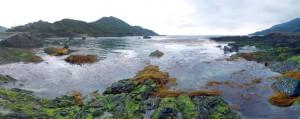 午前中、元浦に漂着した流れ藻