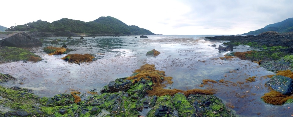 大量の流れ藻漂着。。。