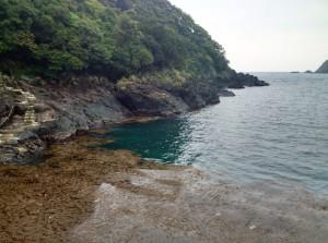 一湊タンク下湾奥に流れ藻がたまる