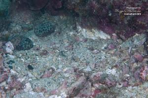 一旦、サンゴや岩のガレを辺りに散らしたところ。。。