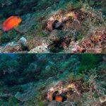 メギスの産卵床とその周辺環境