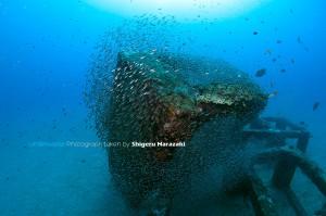 季節外れ?漁礁にはクロホシイシモチのチビが群がりをつくる