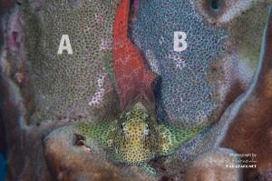 AエリアとBエリア、2つの産卵床