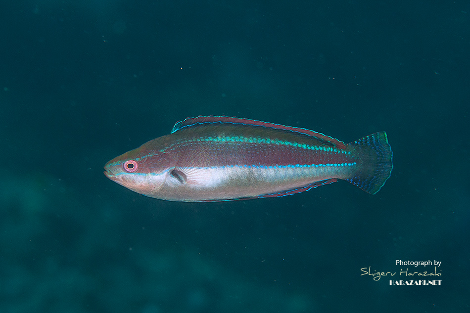 魚の目玉には宇宙があるんです。
