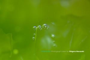 酸素バブルの玉だけを撮ってみたり。。。