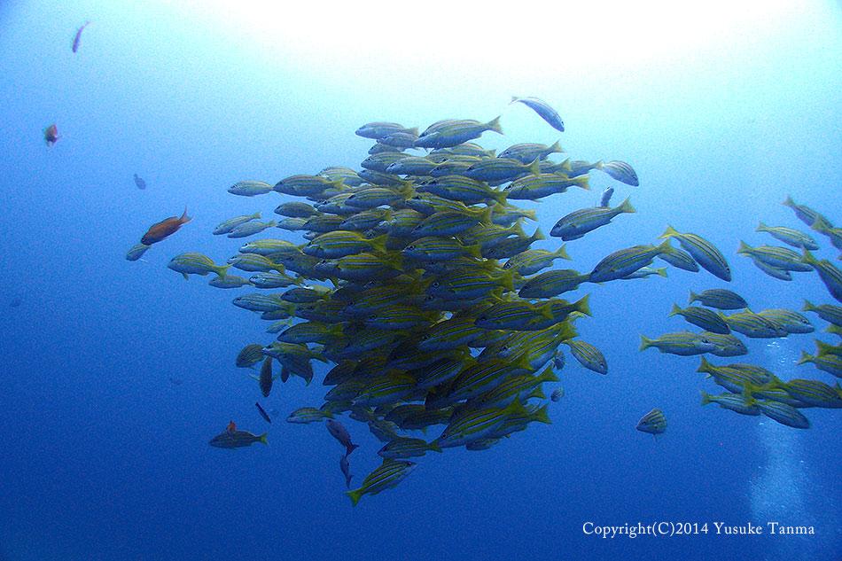 深場の回遊魚