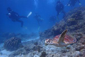 元浦のウミガメ