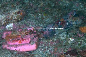 海藻や石灰物が付着して汚れたロガー