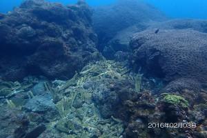 昨日(02/03)のハナガタサンゴ周辺