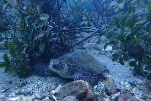 イカ柴は生態系を変える