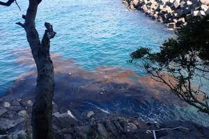 エントリー口にたまった流れ藻