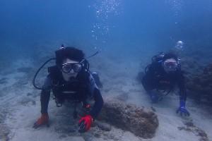 透明度の良い海と魚影の濃い海