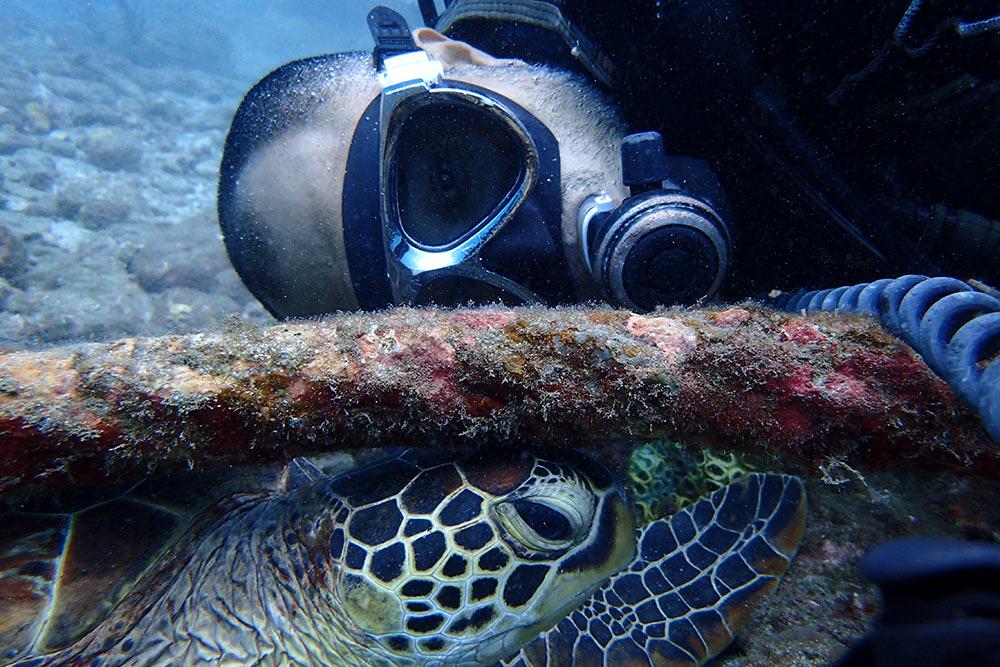 ワイヤーが好き過ぎてたまらないウミガメ。