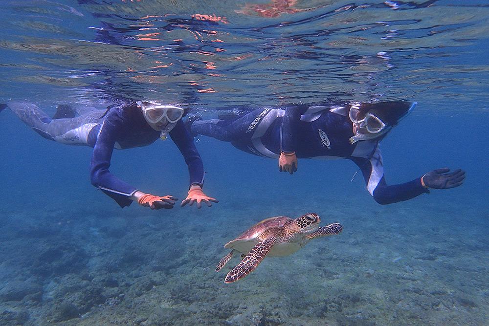 出会ったウミガメの数・10個体以上!(;゚Д゚)
