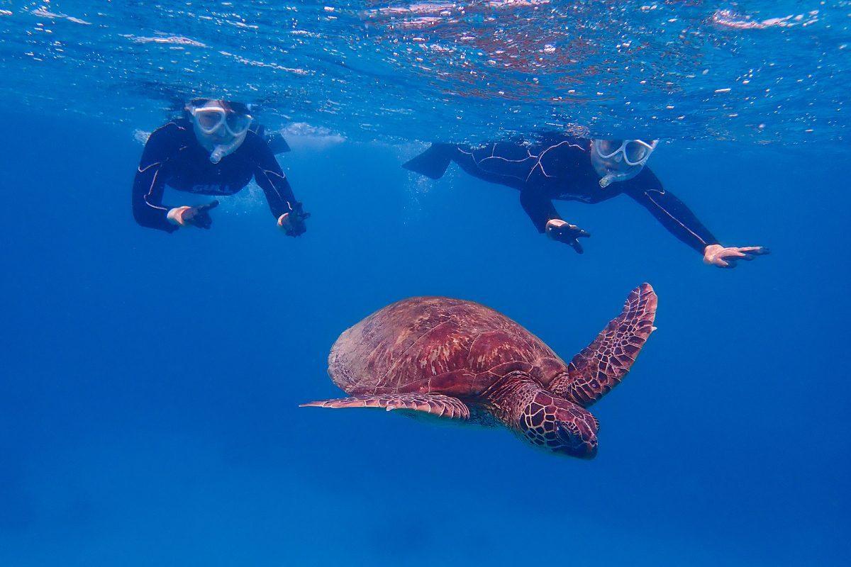 やや時化気味の海でウミガメに出会う