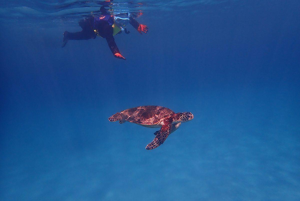 何匹のウミガメに会えるか?