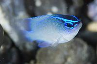 モニタリングサイト1000 サンゴ調査